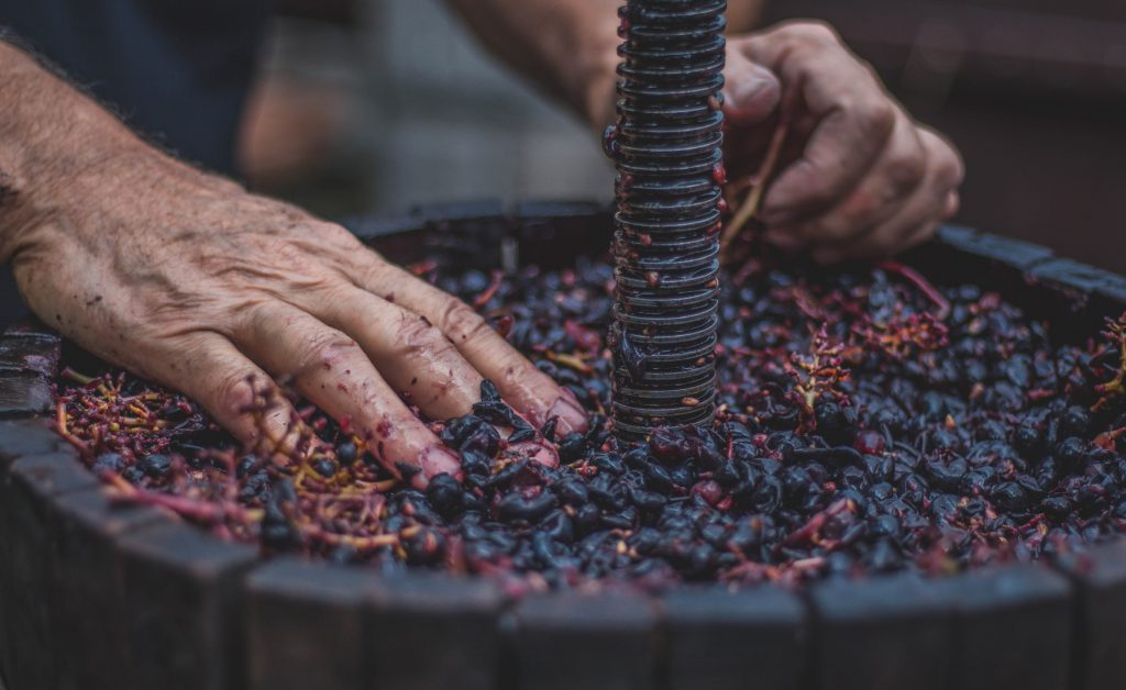 Hands sorting pressed grape skins on a wine press